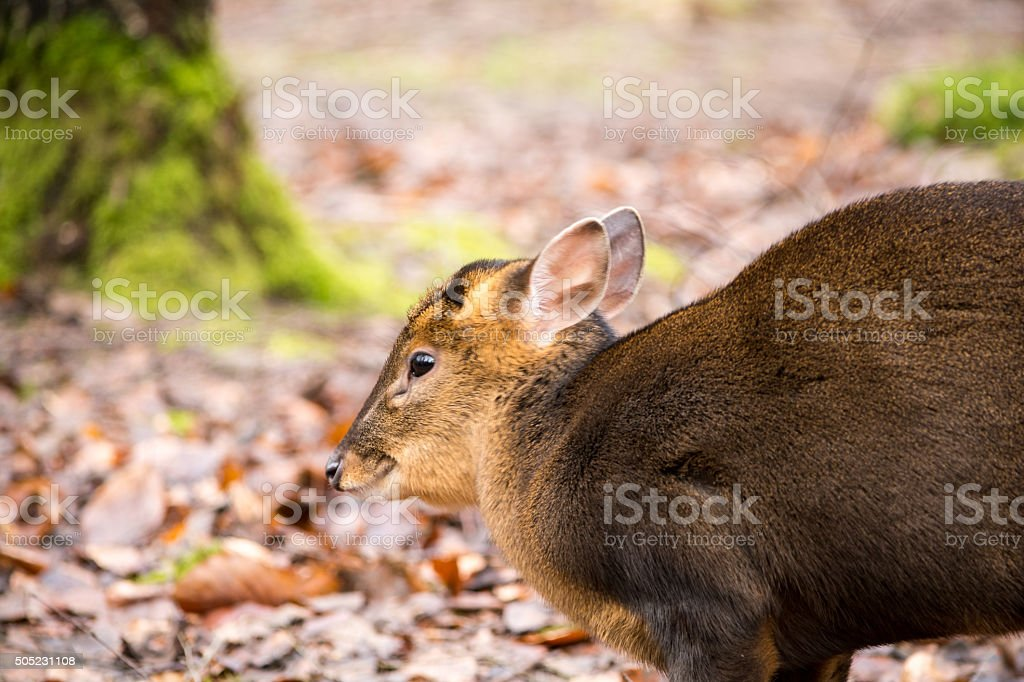 Red Deer in Nature Park stock photo
