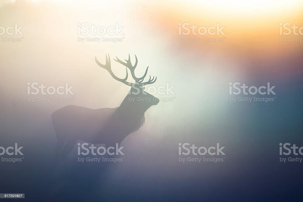 Red Deer(Cervus elaphus) stock photo