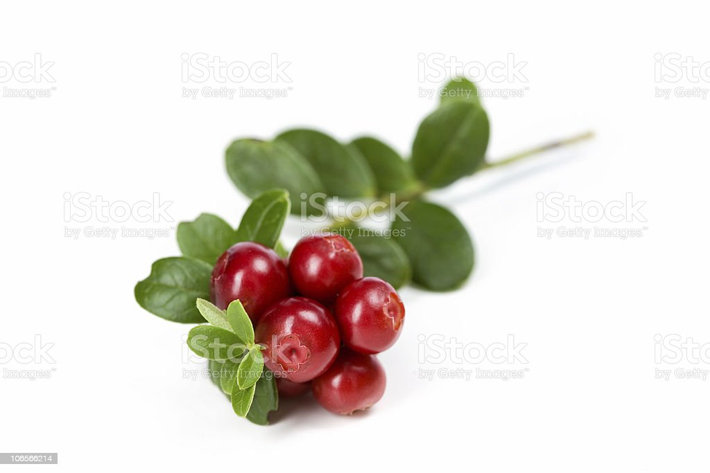 Red delicious cranberries with leaves stock photo