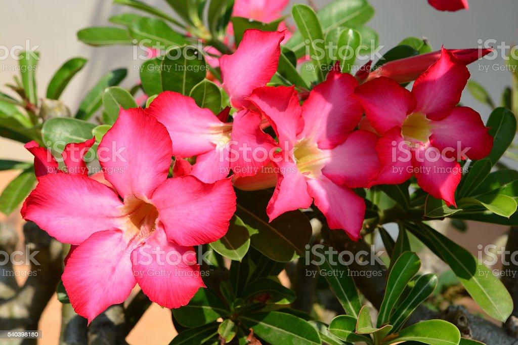 Red Desert Flower stock photo