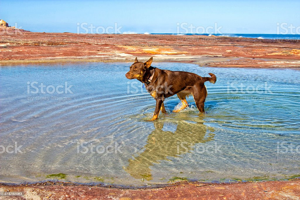 Red Dog Rock Pools stock photo