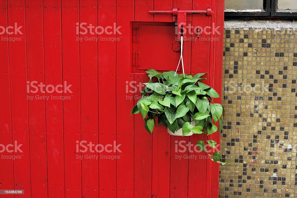 Red door and Scindapsus aureus stock photo