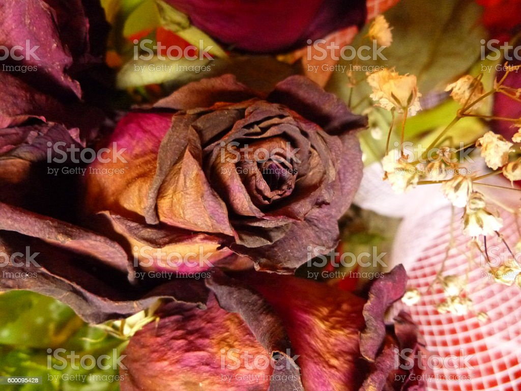 Red dried roses stock photo