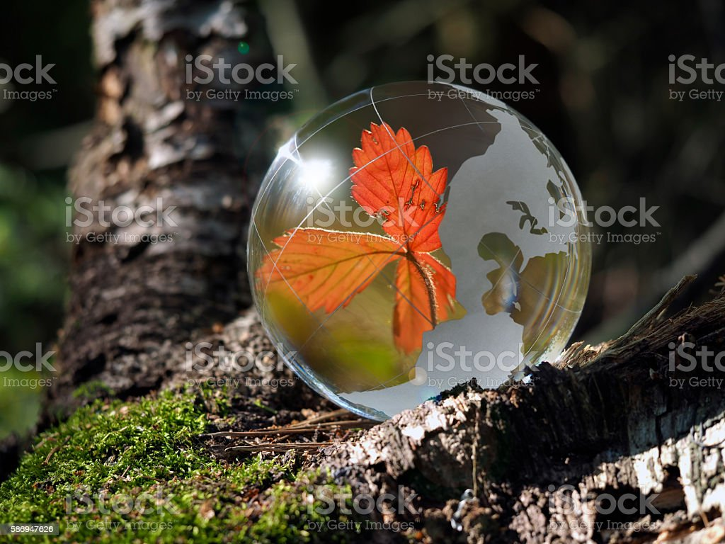Red, dry leaf strawberries - a reflection inside  transparent ball stock photo