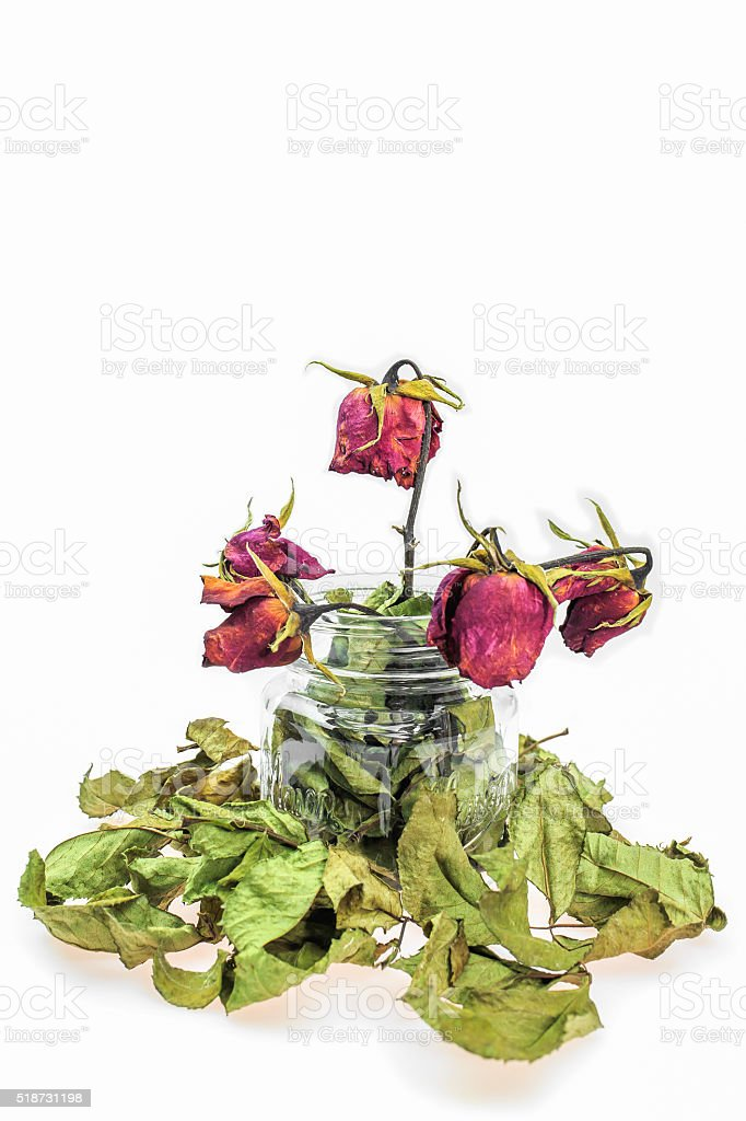 red dry roses in glass stock photo