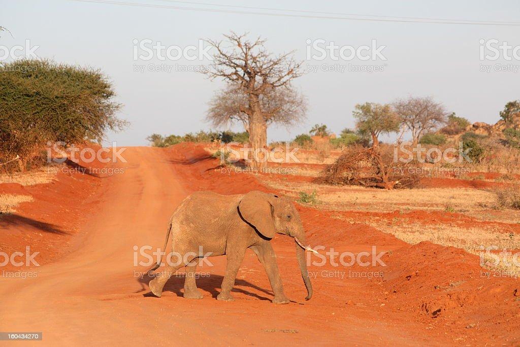 Red elephant royalty-free stock photo
