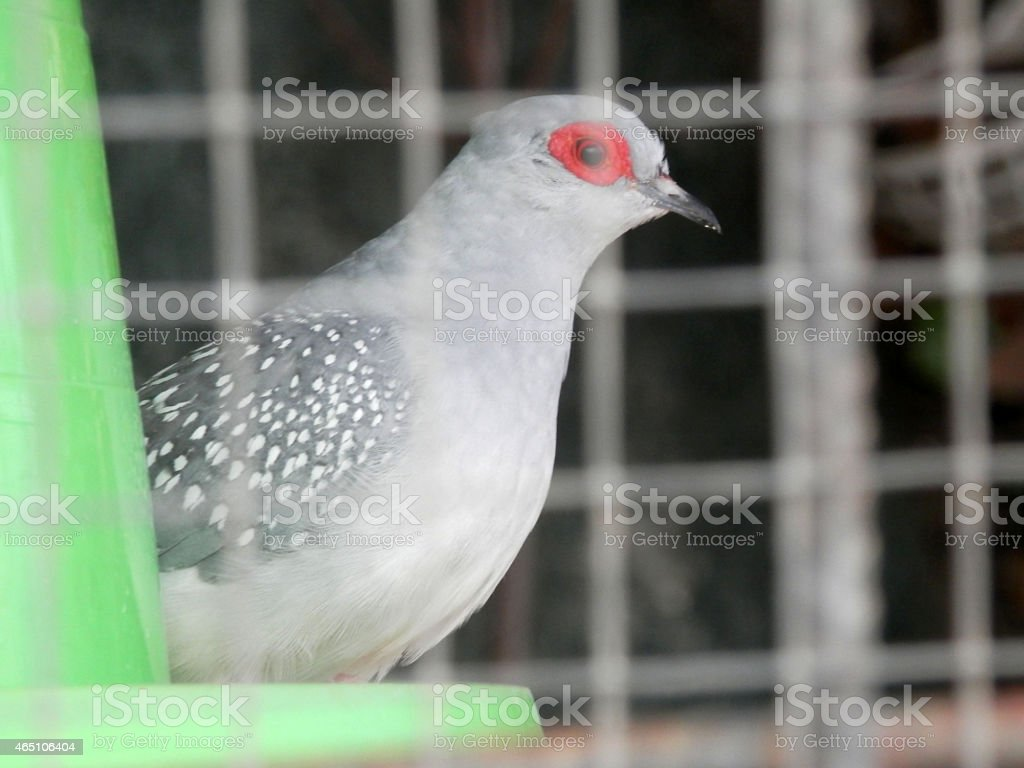 Red eyed bird stock photo