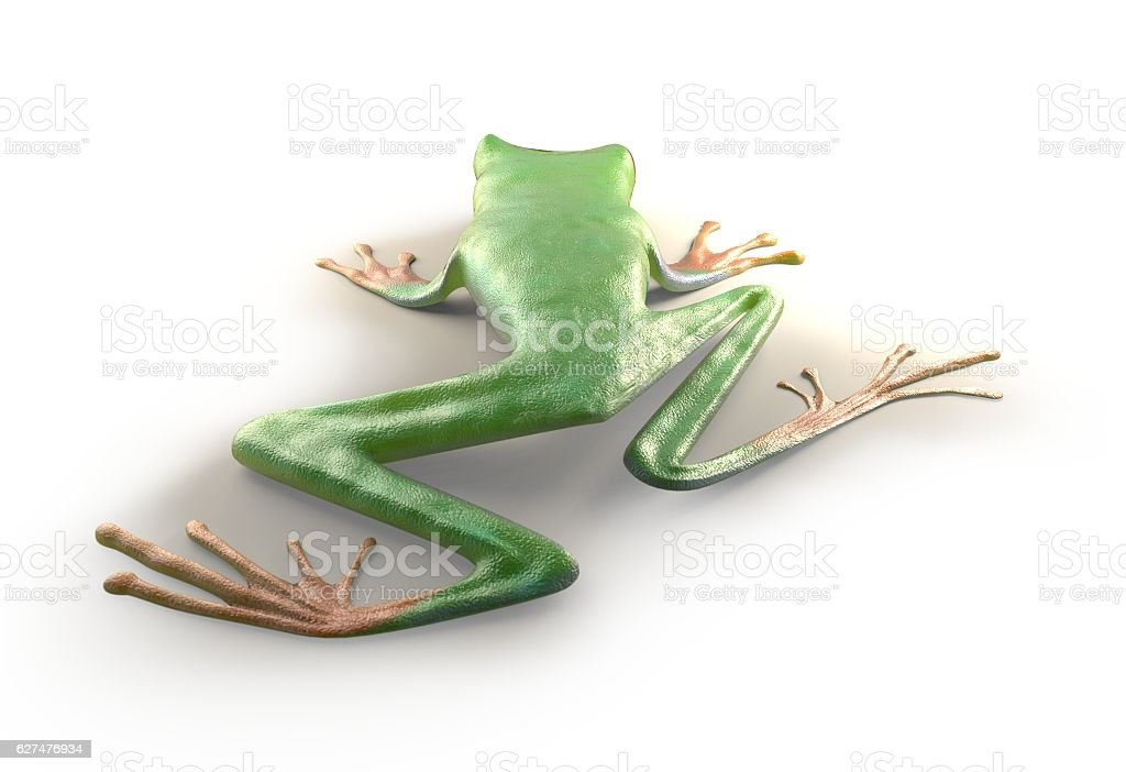 red eyed tree frog from tropical rainforest of Costa Rica stock photo