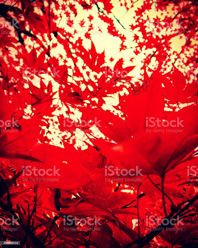 Red fall leaves royalty-free stock photo