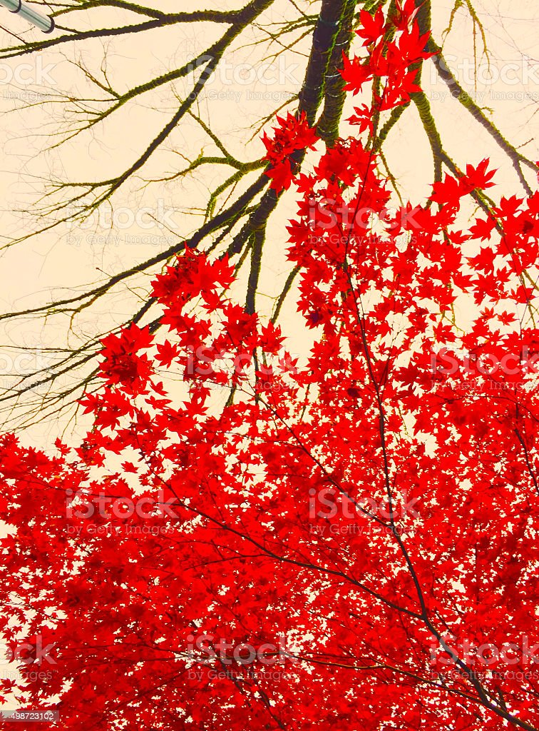 Red fall leaves with branches royalty-free stock photo