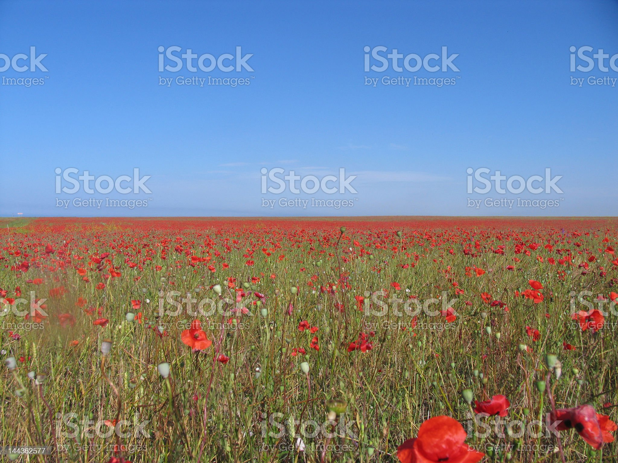 red field royalty-free stock photo