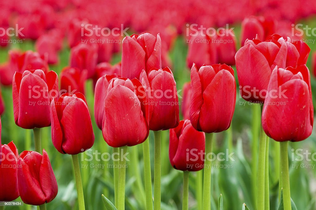 Red Field stock photo
