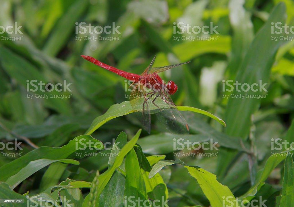 Rojo volar fuego foto de stock libre de derechos
