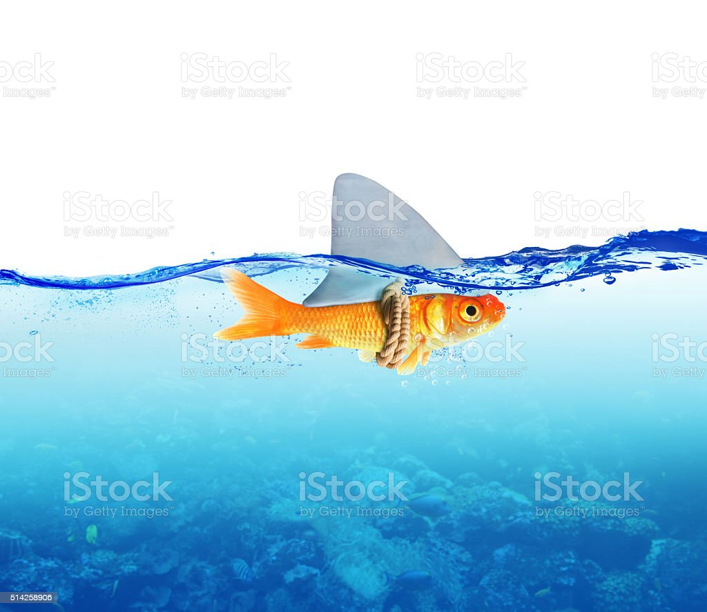 Red Fish as shark stock photo