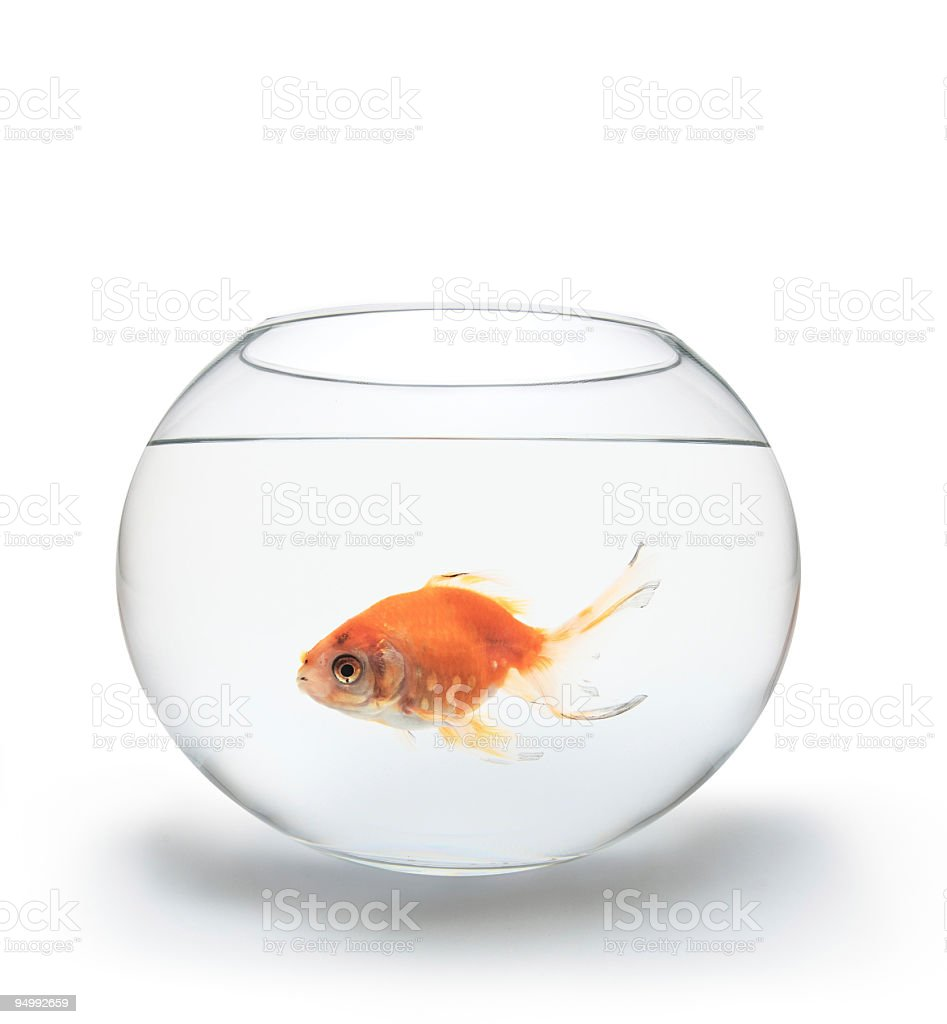 Red fish in a glass bowl on white background stock photo