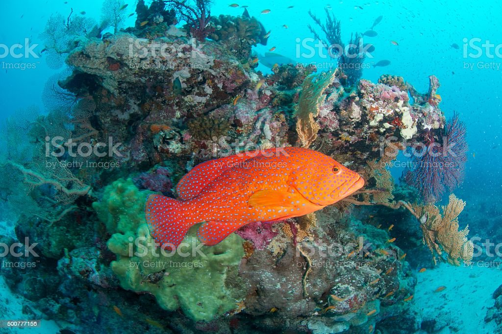 red fish stock photo