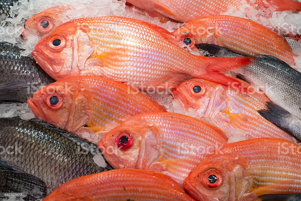 Red fish stock photo