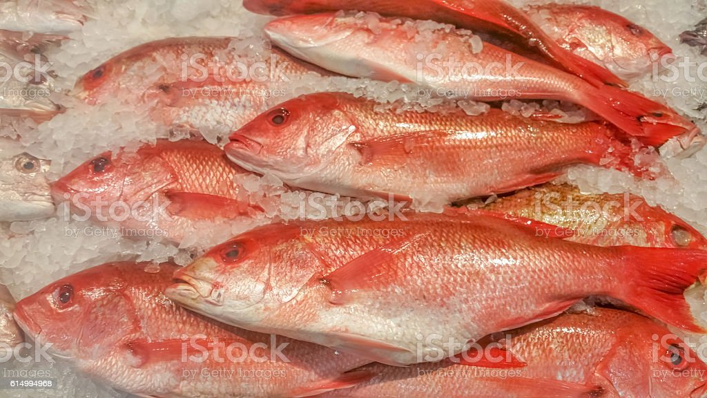 Red Fish stacked on ice at fish market. stock photo