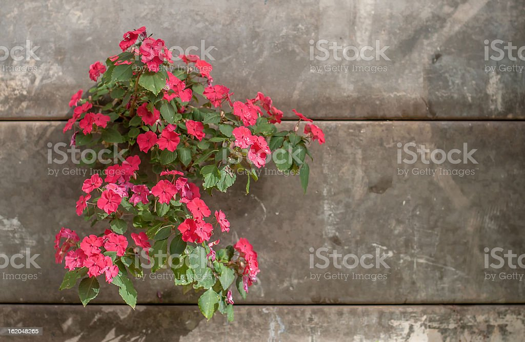 Red flower and Brick royalty-free stock photo