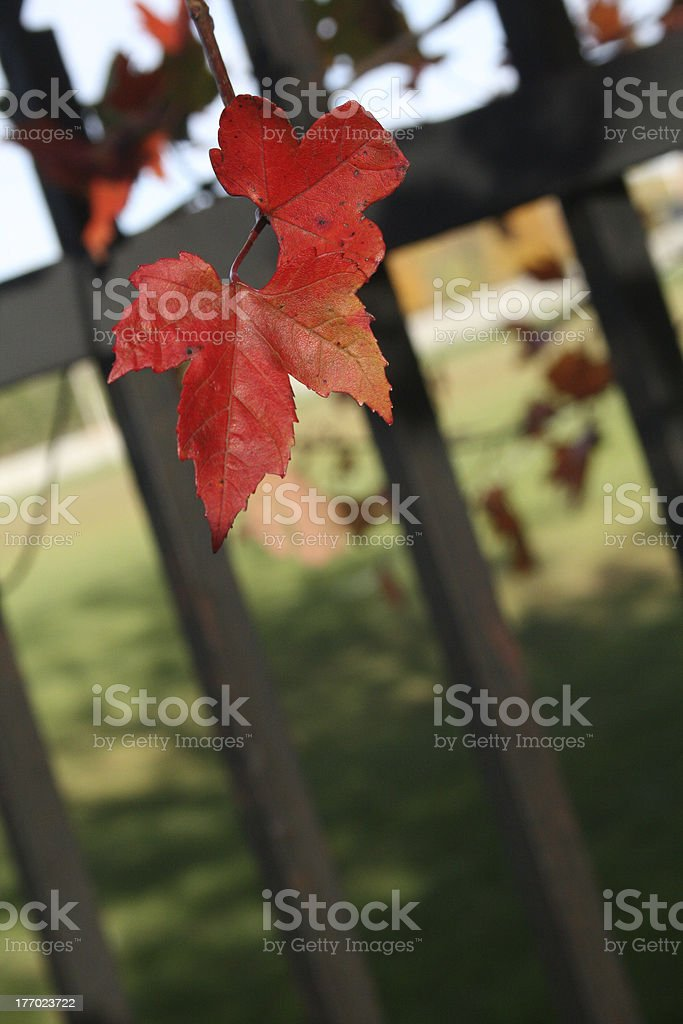 Red Flower and the prison royalty-free stock photo