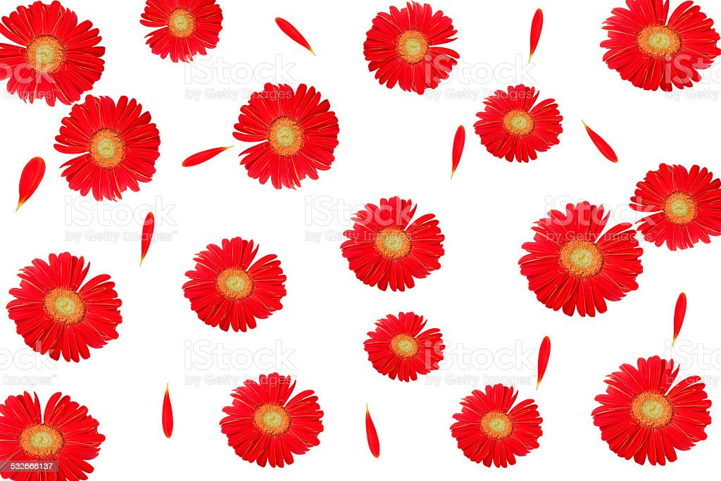 red flower. Background and texture stock photo