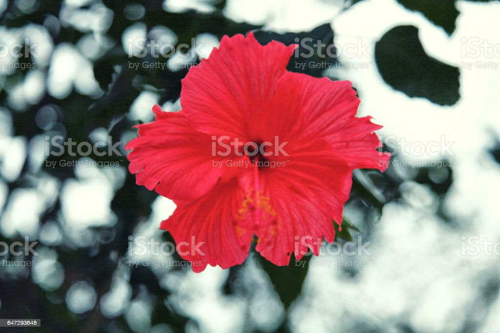 Red flower close-up background stock photo