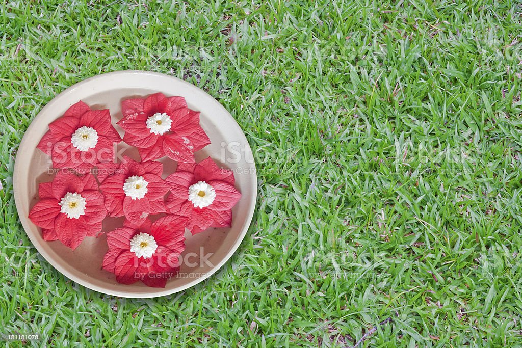 red flower floating in the bow. royalty-free stock photo