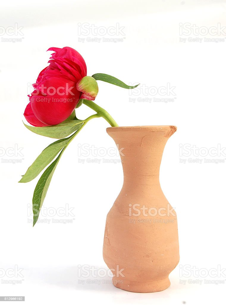red flower in a vase stock photo