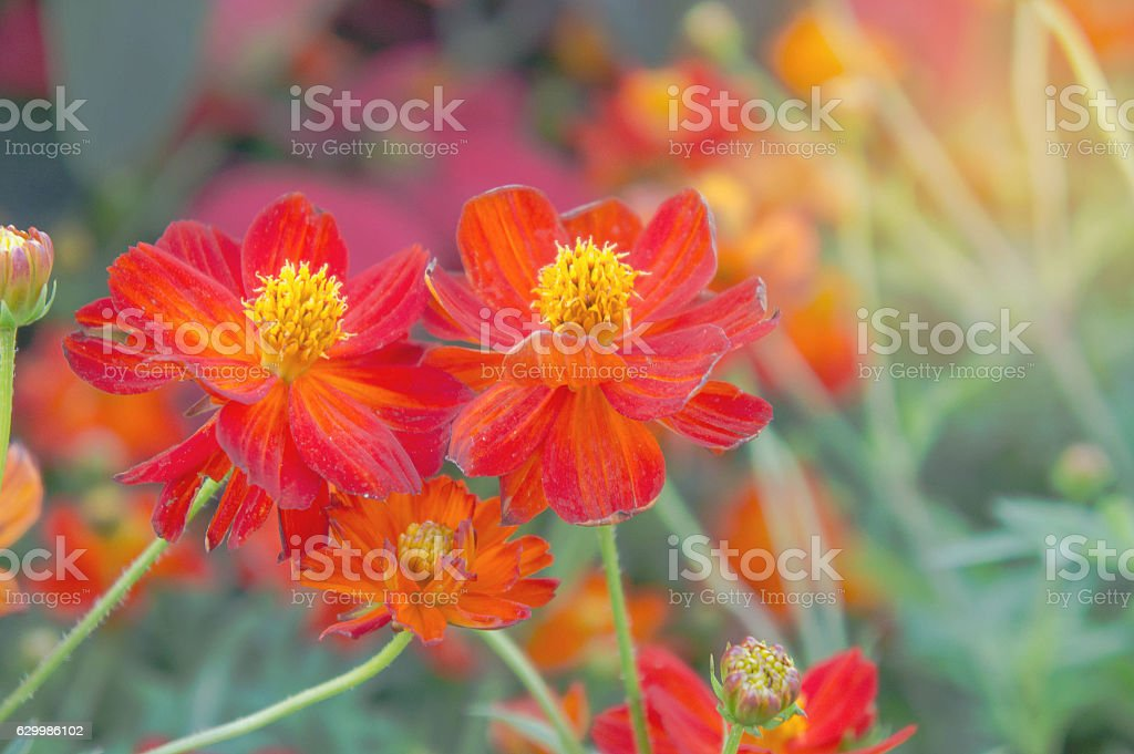 red flower in the park, colorful flower stock photo