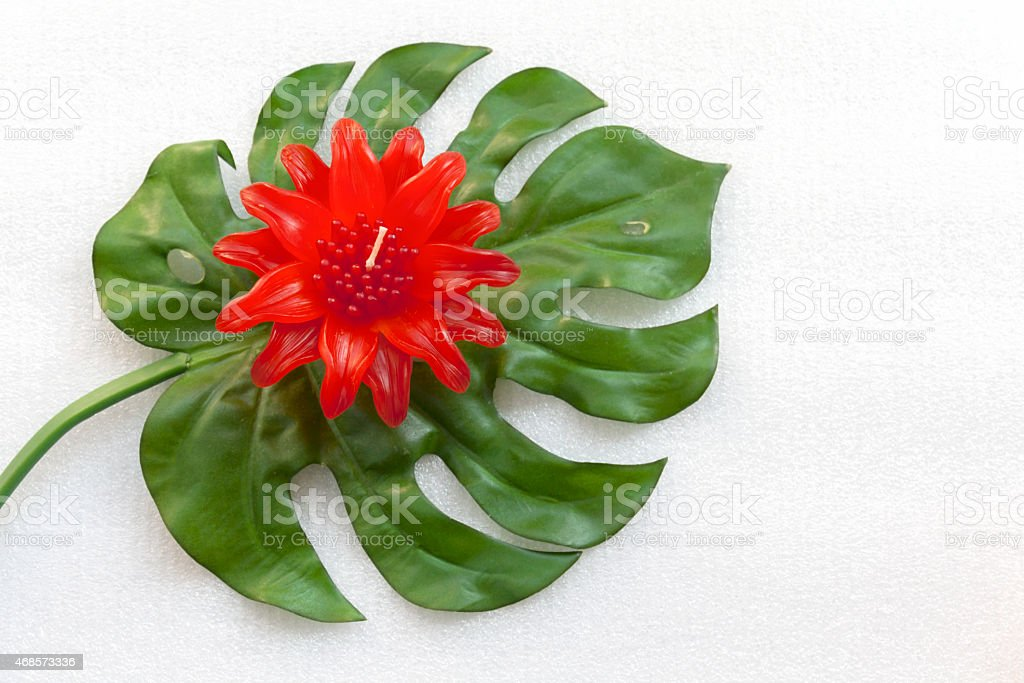 Red flower on green leaf royalty-free stock photo