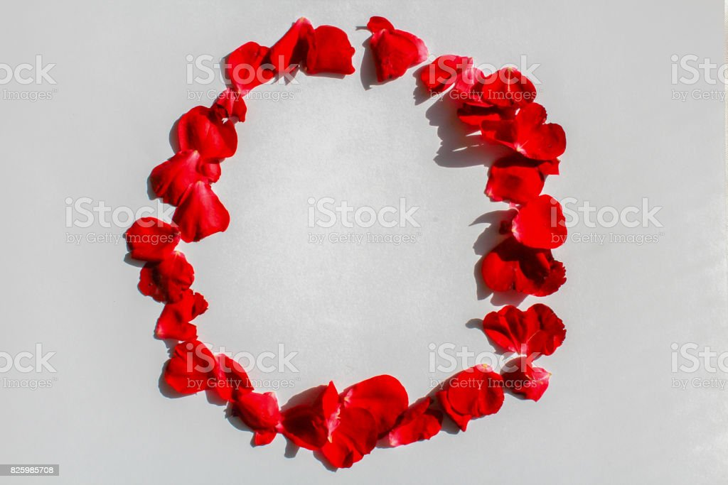 Red flower petals on white background designed to circle stock photo