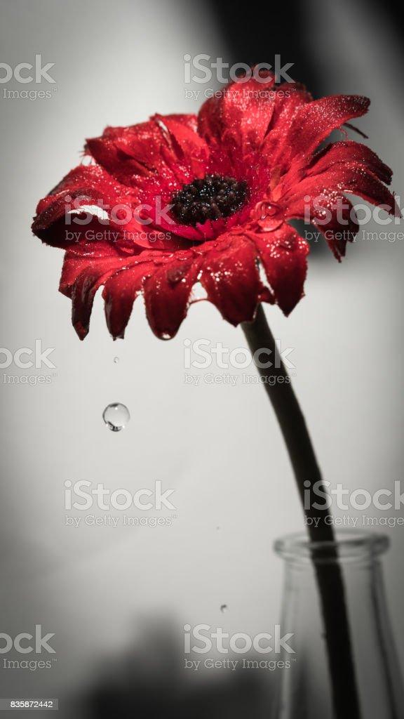 Red flower wet stock photo
