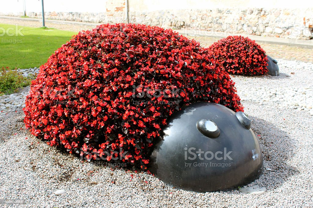 Red flowers bed royalty-free stock photo