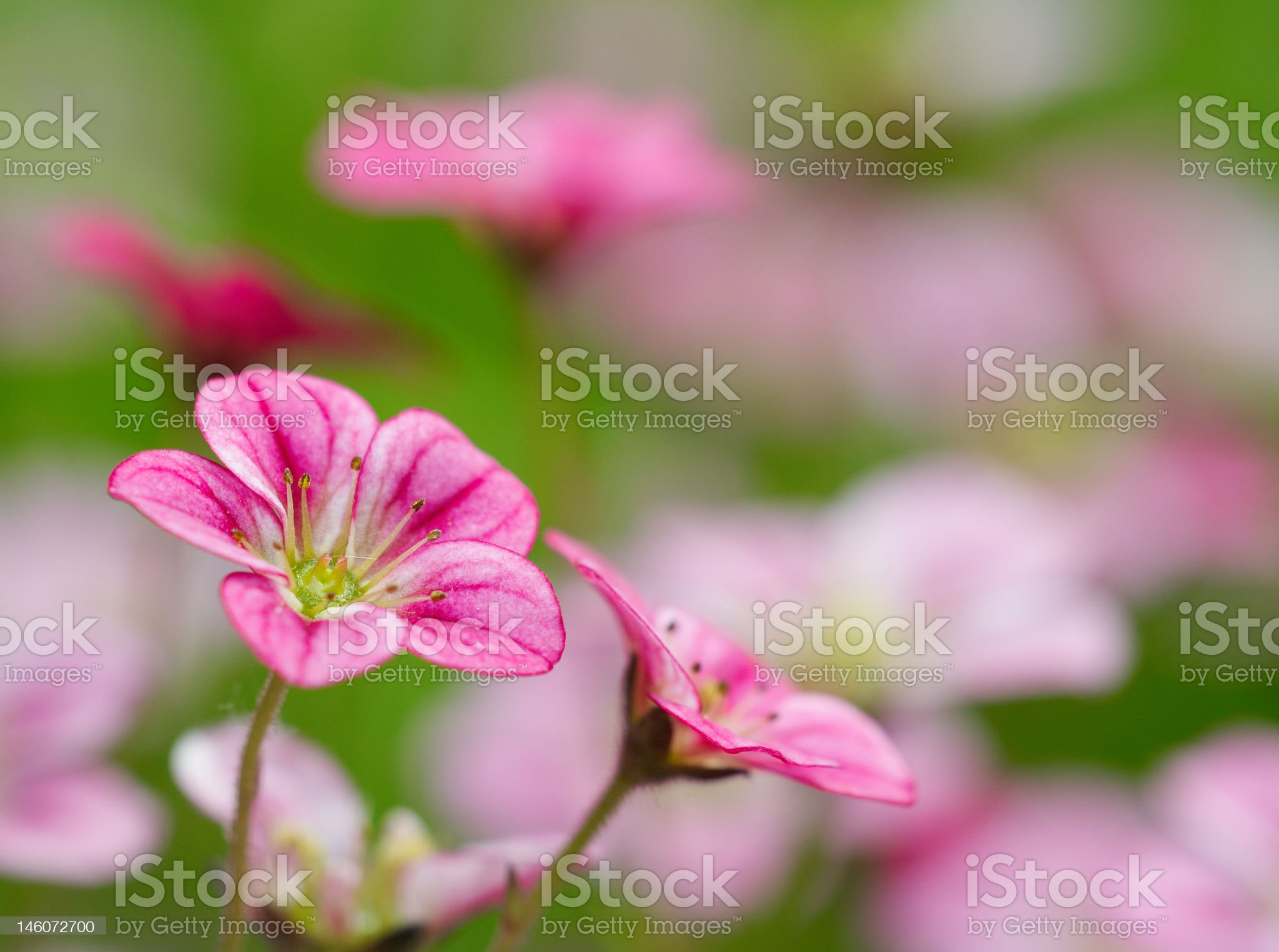 Red flowers in a garden royalty-free stock photo