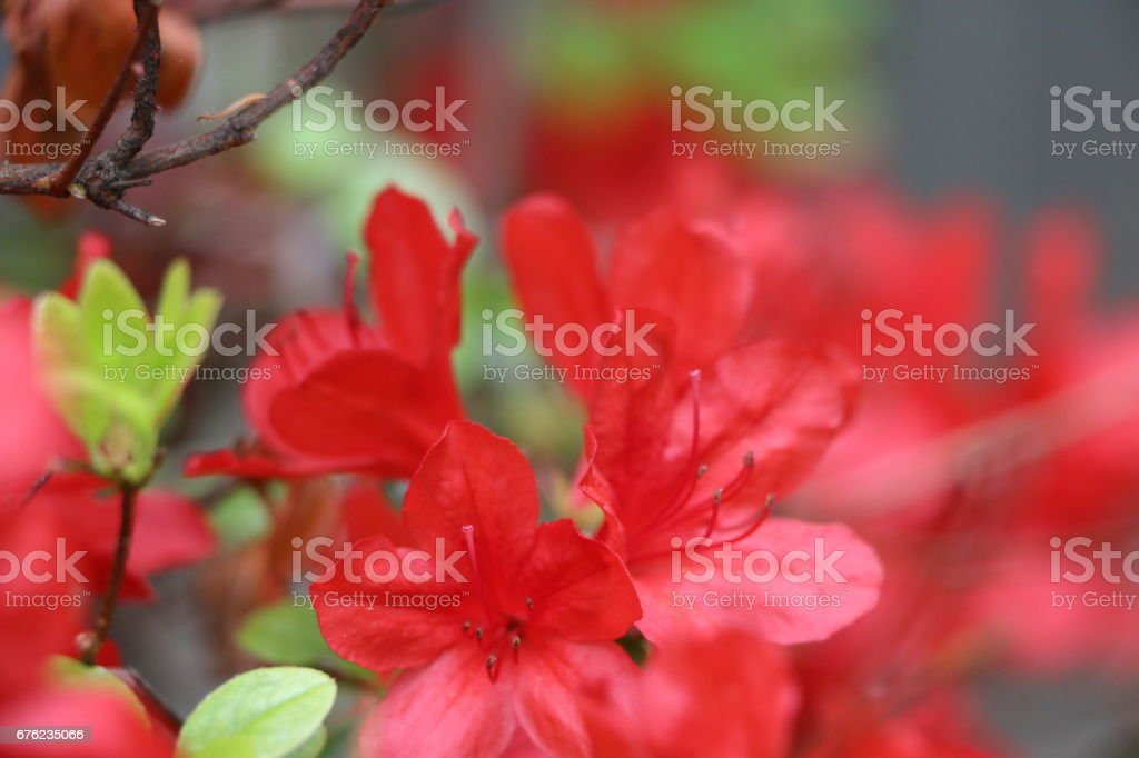 Red flowers in foreground stock photo
