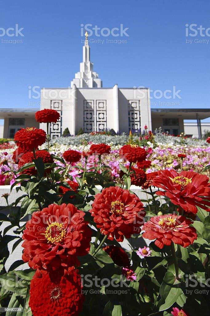 Red flowers in front of a Mormon temple stock photo