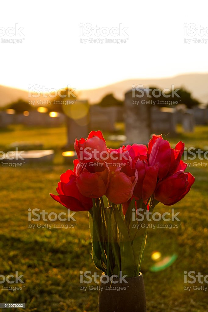 Red Flowers in Sunset stock photo
