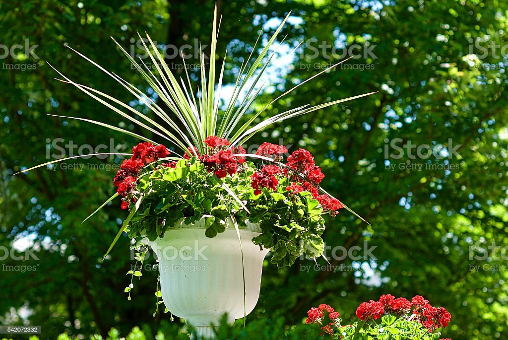 Red Flowers in White Stand with Greenery stock photo
