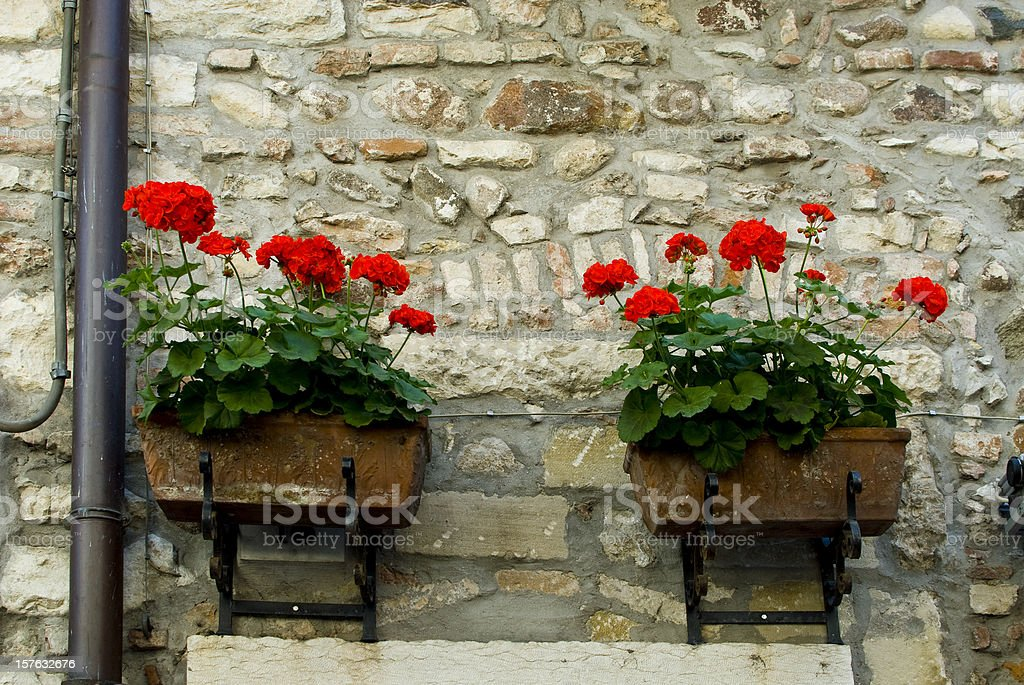 Red Flowers stock photo