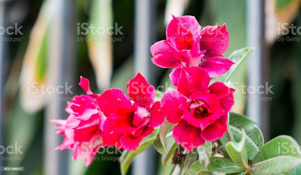 Rote Blumen  Lizenzfreies stock-foto
