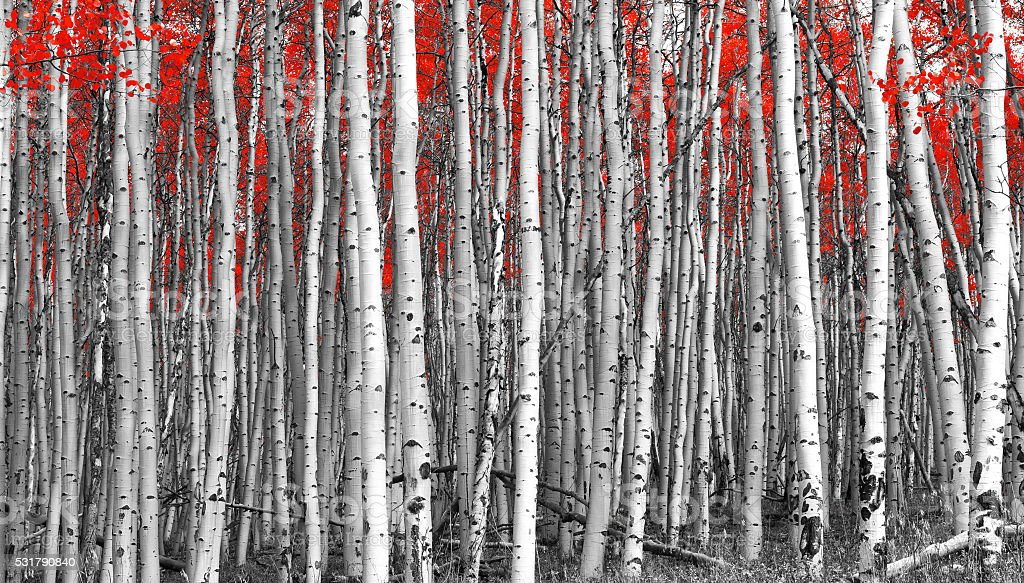 Red Forest Black and White Landscape stock photo