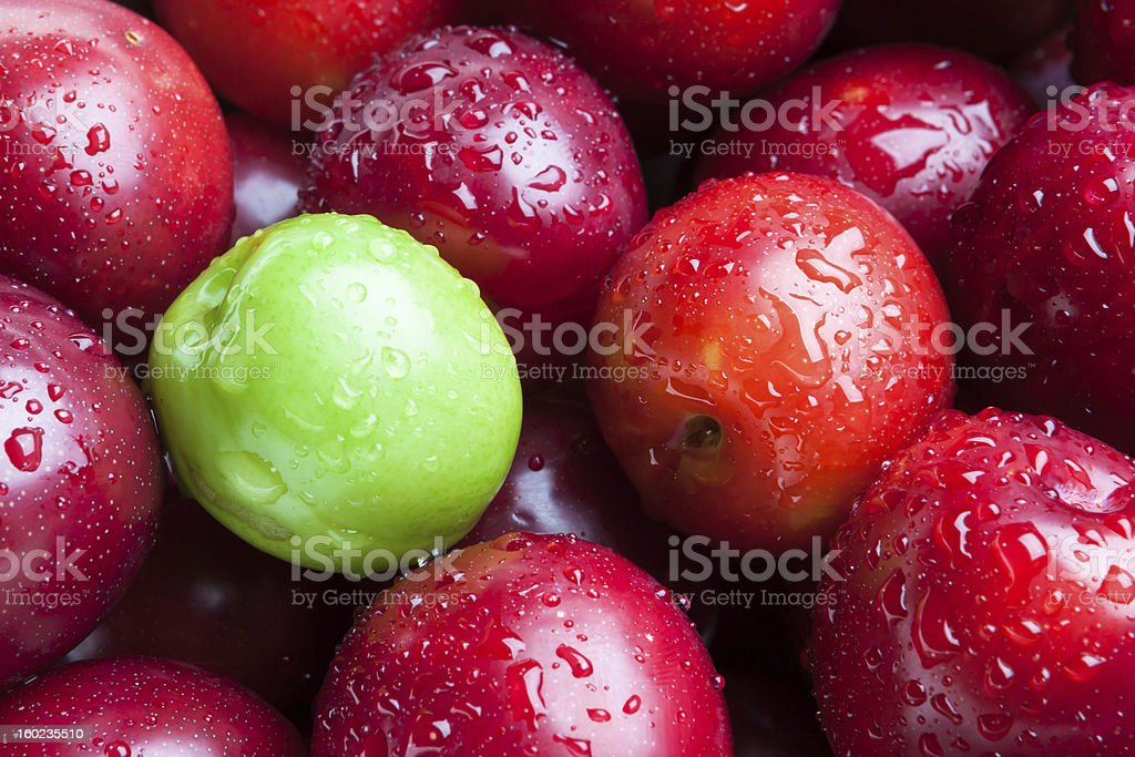 Red fresh plums with one plum still green,unripe.. royalty-free stock photo