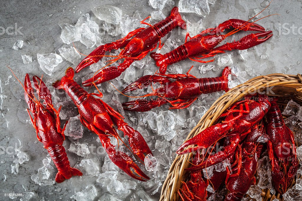Red freshwater crayfish on a metal surface stock photo