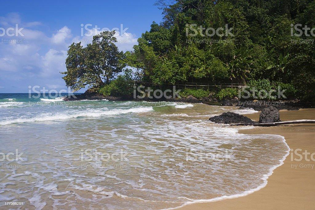 Grenouille rouge plage photo libre de droits