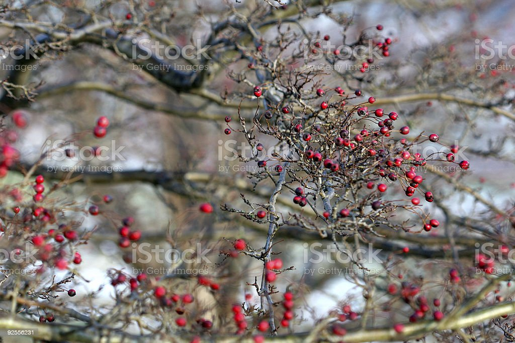 red fruits royalty-free stock photo