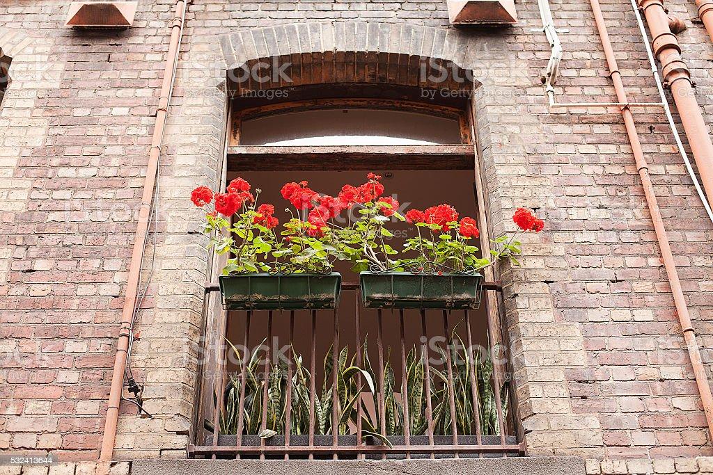 Red Geranium flowers stock photo