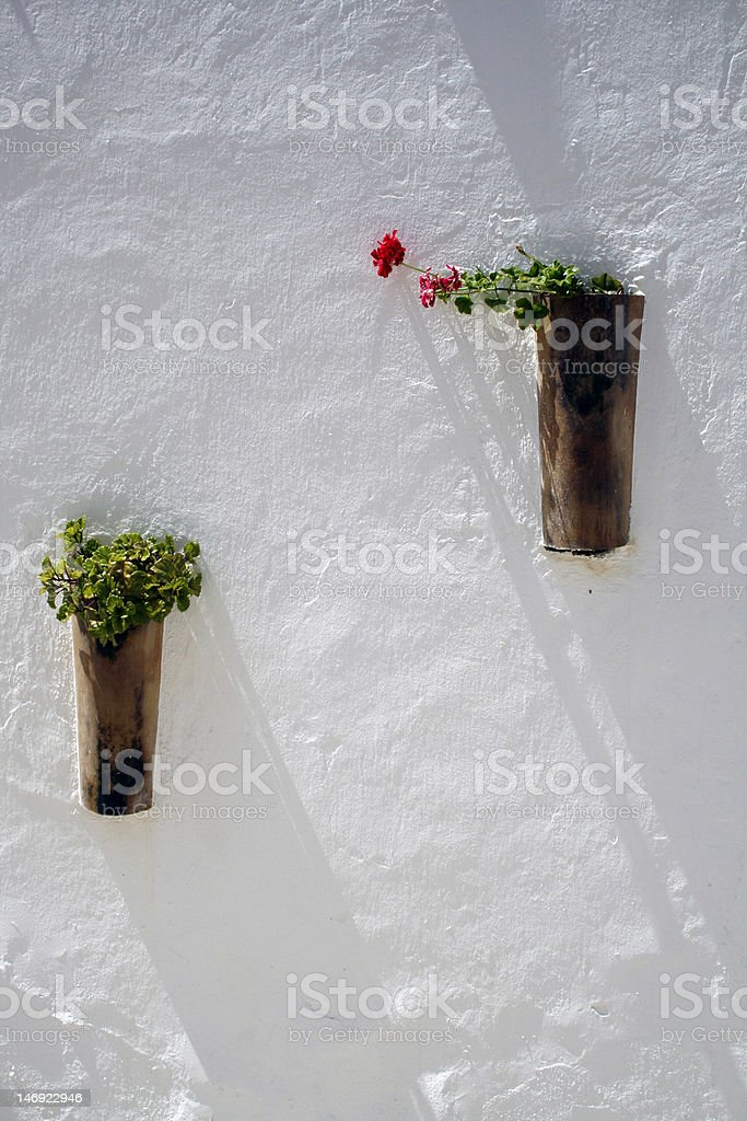 Red geranium royalty-free stock photo