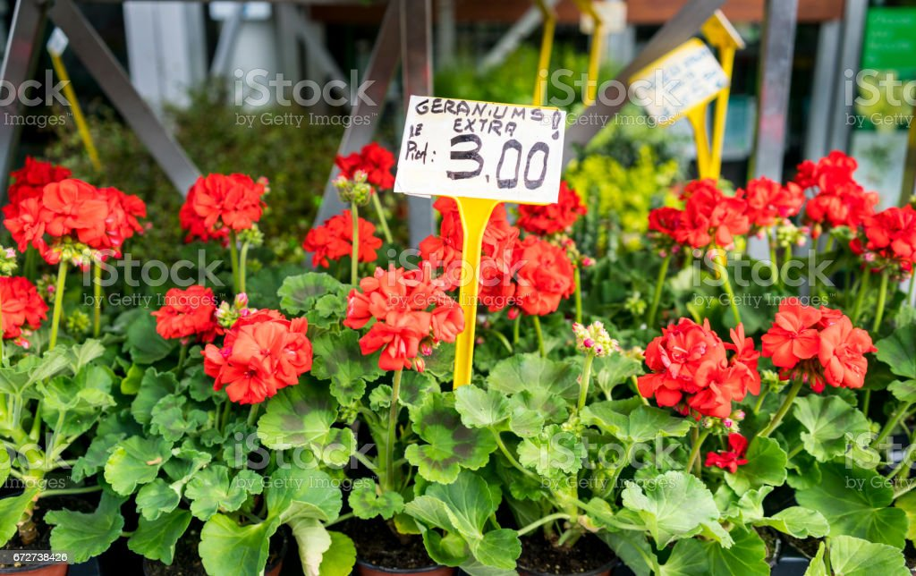 Red geraniums in Paris market with price sign stock photo