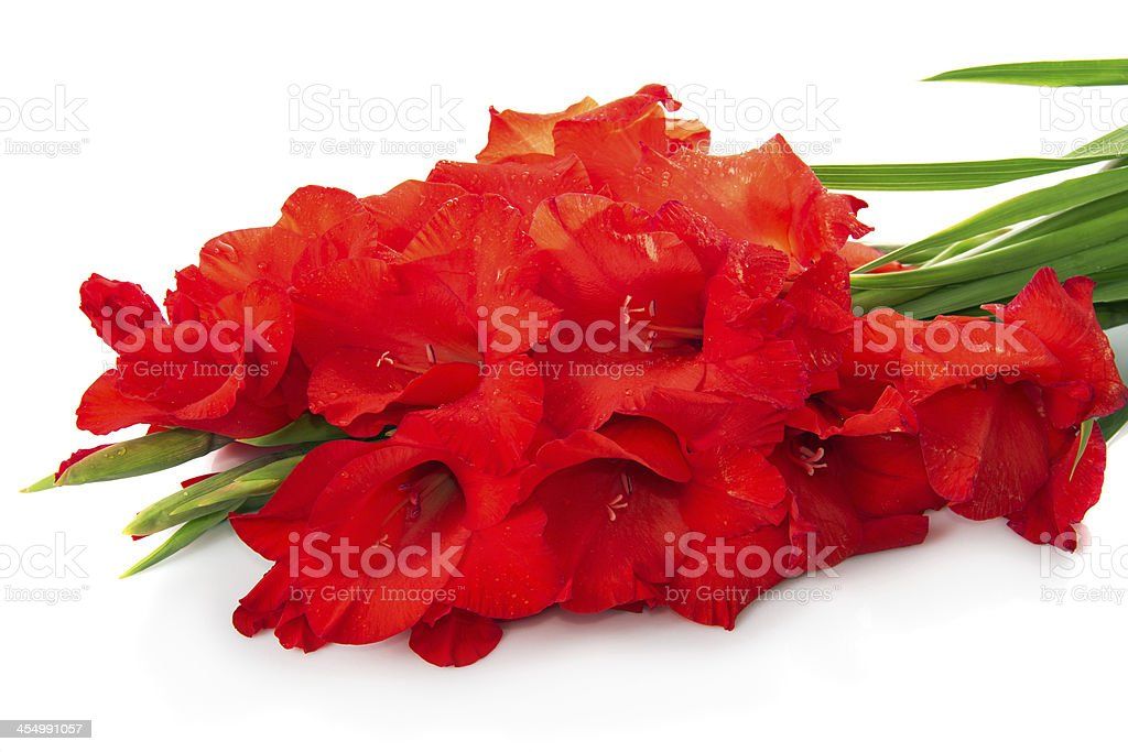 Red gladiolus are isolated on white stock photo