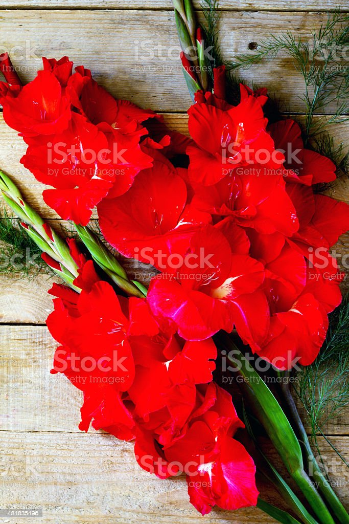 Red gladiolus flowers on a wooden table stock photo
